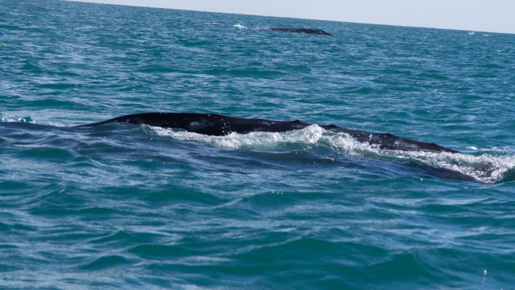 Yep, it's big and black, probably a whale.