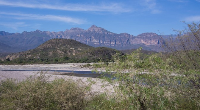 Copper Canyon: Baby Steps